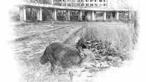 Чернобыль до конца не поняли